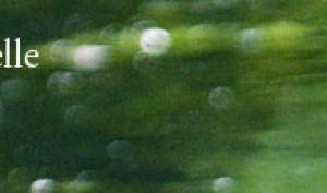 Bannière Réserve Naturelle La Bassée